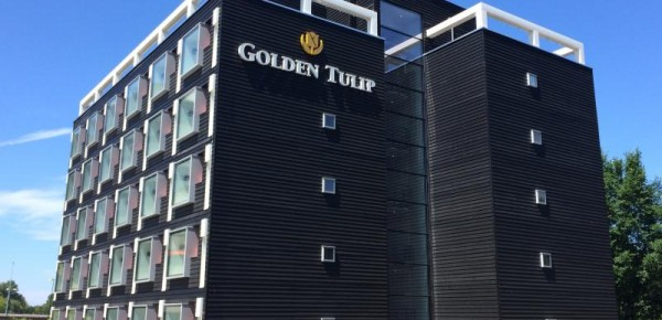 Golden-Tulp